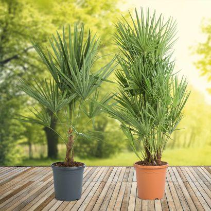 Plante En Pot Plein Soleil Great Plante En Pot Exterieur Plein