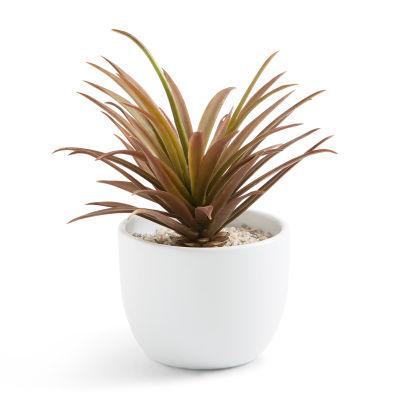 Fausse plante grasse aldi belgique archive des for Plante fausse