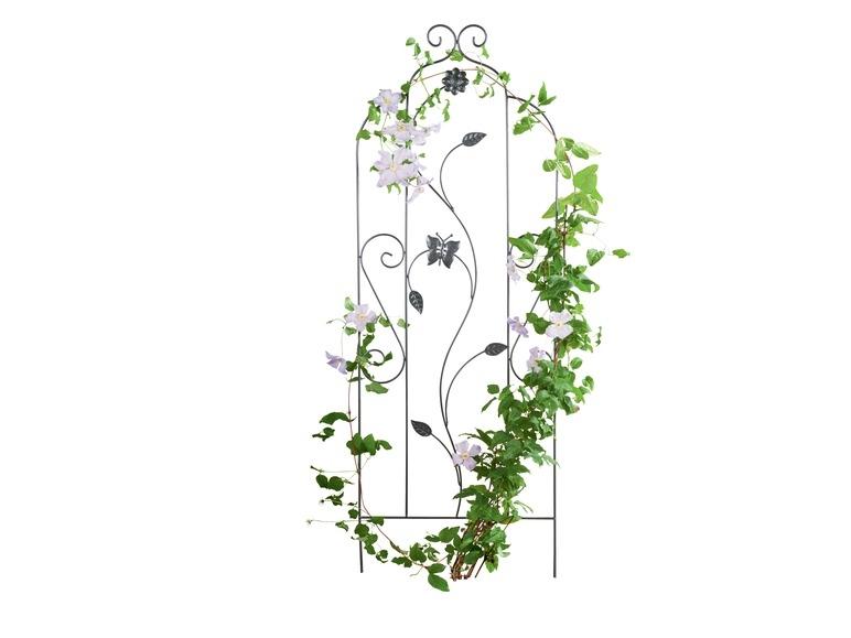 support pour plantes grimpantes lidl belgique archive des offres promotionnelles. Black Bedroom Furniture Sets. Home Design Ideas