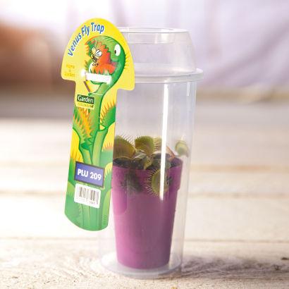 plante carnivore aldi