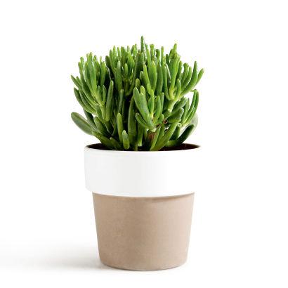 Plante grasse aldi belgique archive des offres for Plantes belgique