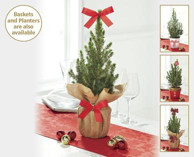 mini christmas trees aldi ireland specials archive. Black Bedroom Furniture Sets. Home Design Ideas