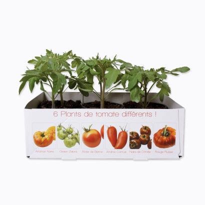 Lot De 6 Plants De Tomates Quot Anciennes Quot Aldi France