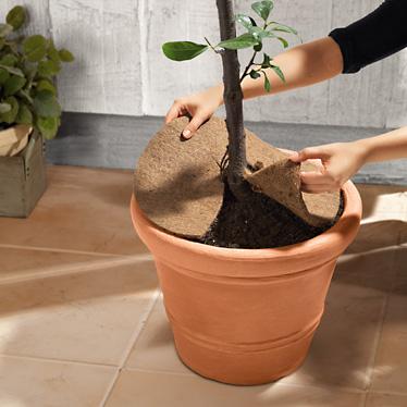 protection pour plantes lidl france archive des offres promotionnelles. Black Bedroom Furniture Sets. Home Design Ideas