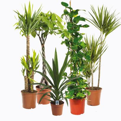 Plante verte xxl aldi france archive des offres for Magasin plante verte