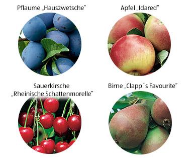 Gardenliner Obstbaum Aldi Süd Deutschland Archiv Werbeangebote