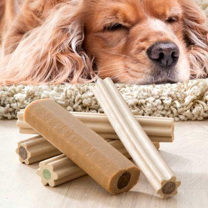 Os dentaires pour chiens aldi luxembourg archive des offres promotionnelles - Produit pour empecher les chiens d uriner ...