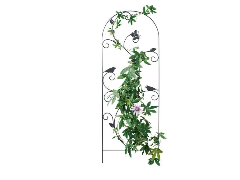 support pour plantes grimpantes lidl belgique. Black Bedroom Furniture Sets. Home Design Ideas