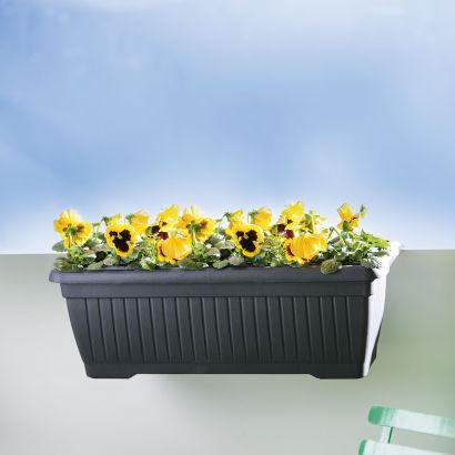 bac fleurs pour balcon aldi belgique archive des offres promotionnelles. Black Bedroom Furniture Sets. Home Design Ideas