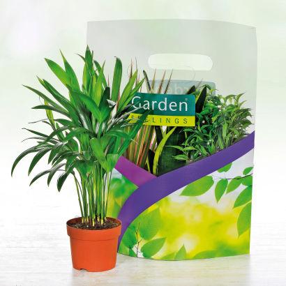 Lot de 3 plantes vertes en sac aldi france archive for Magasin de plantes