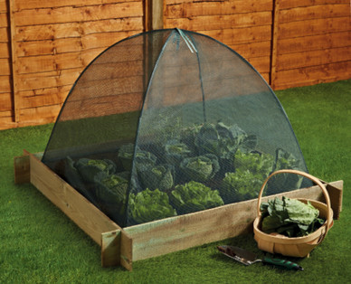 Raised Bed Grow Cloche Aldi Great Britain Specials