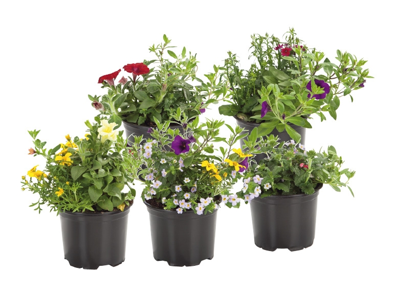 Trio de fleurs